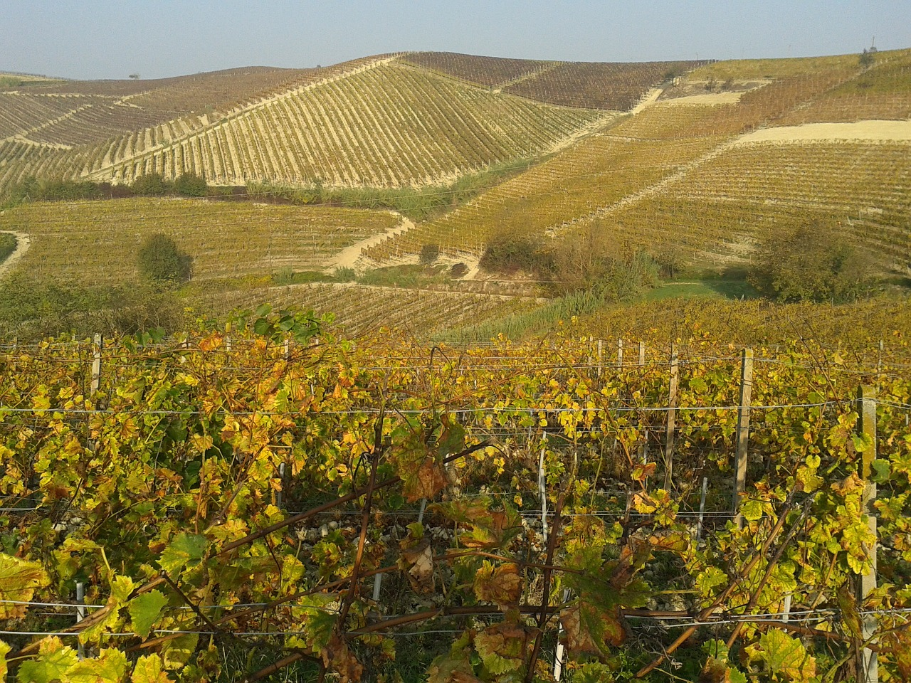 Scoprire le Langhe in autunno