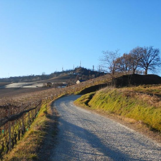 Excursions in the Langhe 6
